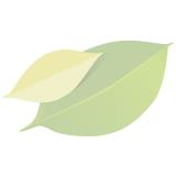 Rosenkohl am Stängel groß (ca. 650 gr Röschen)