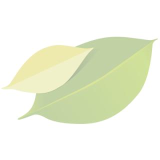 Blattsalat: Eichblatt