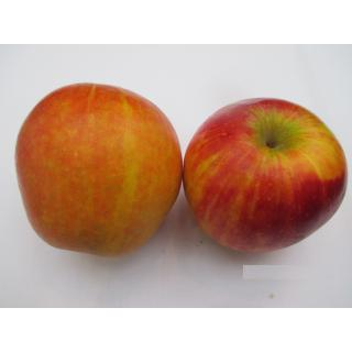 "Äpfel ""Rubinette"""