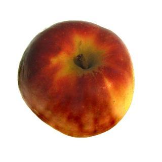 """Äpfel """"Elstar"""""""