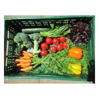 Mittlere Gemüse Kiste